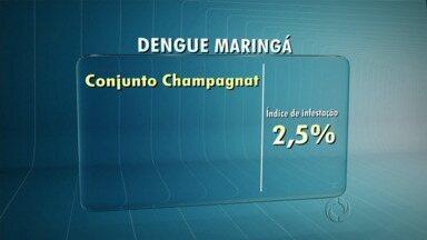 Sai o novo índice de infestação do mosquito da dengue em Maringá - O índice geral está abaixo do aceito pela Organização Mundial da Saúde mas ainda existem locais com problemas na cidade