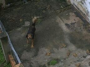 Moradores denunciam barulhos e falta de higiene com animais; autoridades falam do assunto - Moradores denunciam barulhos e falta de higiene com animais; autoridades falam sobre assunto