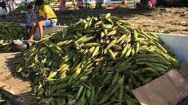 Vendedores de comidas típicas estão animados com a véspera de São João - Vendedores de comidas típicas estão animados com a véspera de São João