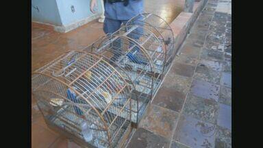 Homem é detido por porte ilegal de armas e crime ambiental em Rifaina, SP - Suspeito de 53 anos tinha antecedentes por crime ambiental e recebeu multa de R$ 15 mil.