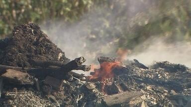 Incêndios no cerrado colocam DF em alerta - Apesar de ainda estarmos no meio do período de seca no cerrado, a área queimada em 2014 é maior do que a que foi queimada no ano passado. A menor umidade registrada este ano foi de 24%.