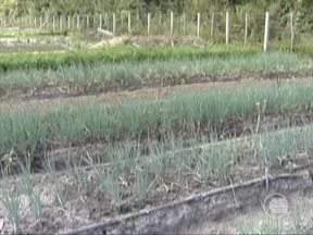 Agricultores do Piauí estão há um ano sem receber o pagamento da Aquisição de Alimentos - Agricultores do Piauí estão há um ano sem receber o pagamento do Programa de Aquisição de Alimentos do Governo do Piauí