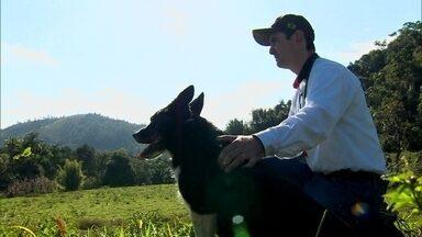 Dupla do interior vai participar do Campeonato Mundial de Pastoreio - Conheça a história de um cão e o seu treinador. O animal é especialista em lhe dar com ovelhas e gado. É um campeão de pastoreio.