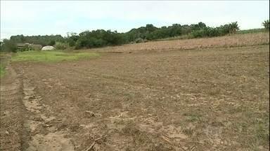 Chuva prejudica produção agrícola em SC - Em Santa Catarina, a chuva também prejudicou a produção agrícola. Em Criciúma, no sul do estado, as lavouras de milho e tomate foram as mais afetadas.