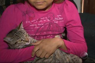 Gatos são encontrados mortos em rua de Vitória da Conquista - Suspeita é que animais tenha sido envenenados.