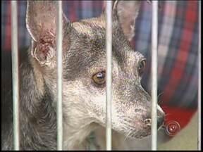 Donos de animais de estimação fazem planos de saúde veterinários - Um mercado pet vem crescendo, o de planos de saúde veterinárias. O valor mensal do plano fica em média R$ 50, dependendo do tipo de cobertura e a idade do cão.