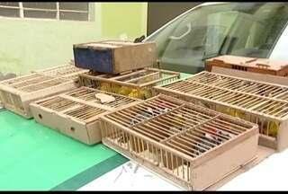 Mais de 100 pássaros silvestres foram apreendidos na BR-418, em Teófilo Otoni - Três homens foram detidos e responderão por tráfico de animais silvestres.