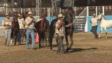 BH recebe 33ª Exposição Nacional do cavalo Mangalarga Marchador - BH recebe 33ª Exposição Nacional do cavalo Mangalarga Marchador