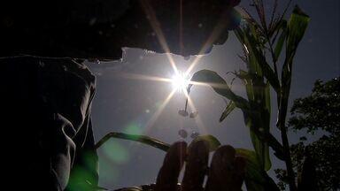 Mesmo com pouca chuva, agricultores apostam no plantio e têm boa safra - Confira na reportagem de Alana Araújo.