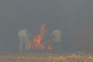 Tempo seco favorece propagação de incêndios em Goiás - Uma área de 60 hectares em Rio Verde pegou fogo devido à palha seca do milho. Uma mata ciliar e as reservar da fazenda também foram atingidas.