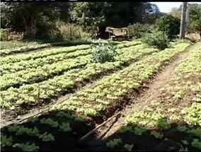 Produtores buscam capacacitação para manejo correto de hortaliças - Minas Gerais é o segundo maior produtor de hortaliças do Brasil