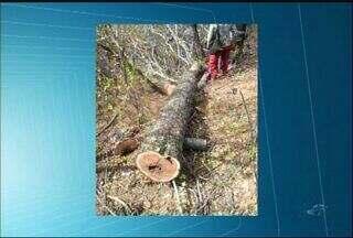 Dois homens são detidos por suspeita de crime ambiental, em Jati, no Ceará - Homens estavam desmatando uma árvore sem licença ambiental.