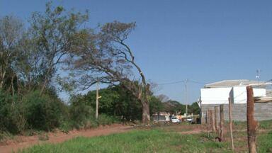 Corte de árvore gera reclamação em Paranavaí - Prefeitura justificou que o corte é necessário para obras de infraestrutura na região