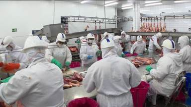 Carne do Paraná vai abastecer mercado russo depois de embargos - Frigoríficos contratam mais funcionários para atender a demanda