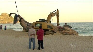 Baleia morta é içada por guindastes em praia do Rio de Janeiro - Baleia da espécie jubarte de 15 metros e cerca de 30 toneladas encalhou na areia. Os bombeiros tentaram puxá-la com uma corda. Depois usaram retroescavadeiras.