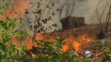 Queimadas na Serra do Japi aumentam cerca de 70% em relação a 2013 - Segundo a Guarda Florestal, na maioria das vezes, os incêndios são provocados por pessoas que usam o fogo para limpar terrenos.