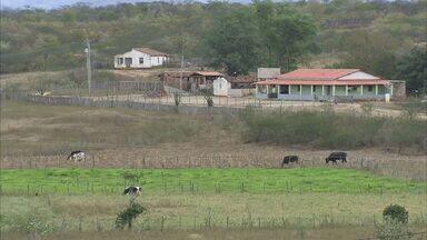 Quixeramobim tem o maior rebanho bovino do Ceará - Veja como os agricultores usam a renda gerada do gado.
