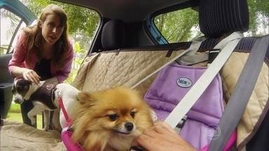 Saiba como transportar cães com segurança - O AutoEsporte mostra a maneira correta de levar filhotes no banco traseiro utilizando acessórios como cinco de segurança especial e cadeirinha.