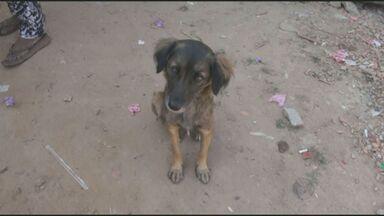 Moradores reclamam de animais abandonados em Piracicaba - A Secretaria de Saúde informou que vai acionar ONGs de proteção para abrigar os animais abandonados. O canil da Prefeitura não tem capacidade para abrigar todos.
