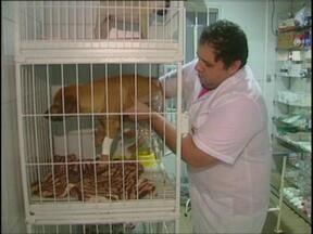 Cachorro que vivia na rua teve ferimentos nos olhos - Ele está em recuperação numa clínica de Carazinho, RS