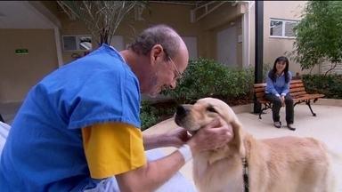 Cachorro ajuda na recuperação de paciente em Niterói (RJ) - Oswaldo foi internado com uma grave insuficiência pulmonar e arritmia no coração. Teve três paradas cardíacas e ficou em coma. O reencontro com o cão ajudou muito na recuperação.
