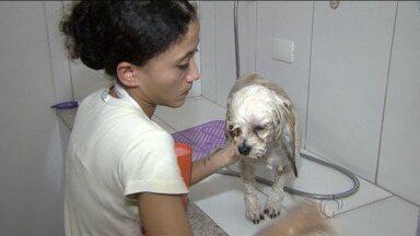 Mercado pet está em alta no Paraná - Uma pesquisa aponta que donos gastam em média de R$100 a 300 reais mensalmente com um cão.