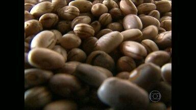 Agricultores reduzem as vendas do feijão - A saca de 60kg está sendo vendida por 60 reais. No mesmo período de 2013, o agricultor vendia a mesma quantidade por 120 reais.