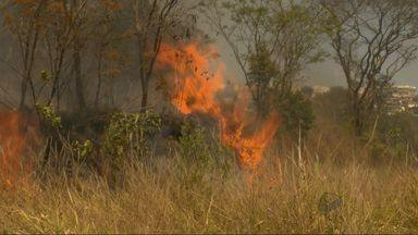 Fogo destrói quase 100 mil metros quadrados de área em Varginha, MG - Fogo destrói quase 100 mil metros quadrados de área em Varginha, MG