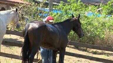 Encontro reúne cavaleiros em Santa Bárbara do Monte Verde, MG - Mais de 300 apaixonados por cavalos se encontraram neste sábado (13) na cidade da Zona da Mata, para confraternizar e realizar um passeio pela região.