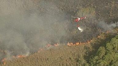 Incêndio destrói parte do Parque Nacional de Brasília - Um grande incêndio destruiu parte do Parque Nacional de Brasília. O fogo, que só foi controlado no final do dia, começou na manhã de segunda-feira (15) em uma área do Exército.
