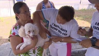 Campanha de Vacinação Antirrábica tem início nesta sexta (26), em Manaus - Meta é vacinar um total de 206.568 animais na cidade, segundo prefeitura.