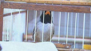 PM Ambiental apreende mais de 70 pássaros em Ribeirão Preto, SP - Diversas espécies foram encontradas em galpão no Recreio Internacional.