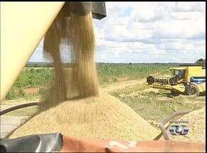 Tocantins deve colher mais de 3 milhões de grãos na safra de 2014 - Tocantins deve colher mais de 3 milhões de grãos na safra de 2014