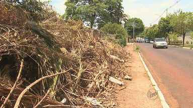 Galhos e lixo em calçada incomodam moradora em bairro de Ribeirão Preto - Internauta enviou imagens de problema na Avenida Portugal próximo à Rua Platina.