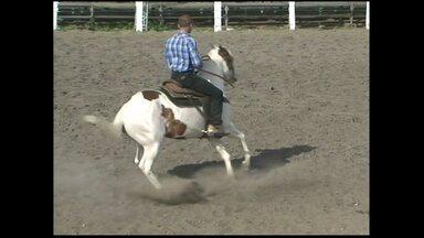 Nova técnica para domar cavalos usa a 'intimidade' para animal entender comandos de voz - Confira na reportagem que mostra um exemplo da doma racional em Feira de Santana, distante cerca de 100 km de Salvador.