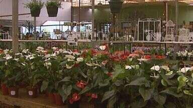 Veja as dicas de decoração com flores na série Seu Jardim - Espécies de folhagens e flores são as melhores opções para cultivar dentro de casa.