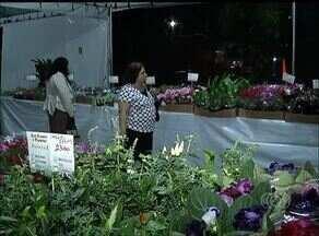 Feira expõe flores de outras regiões em Palmas - Feira expõe flores de outras regiões em Palmas