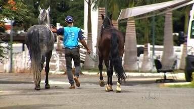 Goiás registra um caso de mormo após 50 anos - Doença ataca o sistema respiratório de cavalos e outros tipos de equinos. Mormo é contagioso e pode até matar o animal. O Parque de Exposição da Nova Vila está interditado.