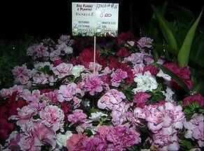 Plantas de até R$ 480 são vendidas em feira beneficente na capital - Plantas de até R$ 480 são vendidas em feira beneficente na capital