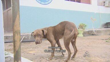 Mais de 20 postos serão montados em Santana para a campanha de vacinação antirábica - A campanha de vacinação antirábica do município de Santana ocorre neste sábado. Para garantir o maior número de cães e gatos vacinados, vão ser montados 22 postos de imunização.