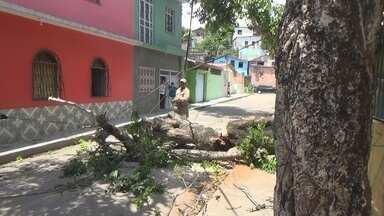 Queda de árvore interdita rua em Manaus - Tombamento preocupou moradores; estudante quase foi atingido pela árvore.