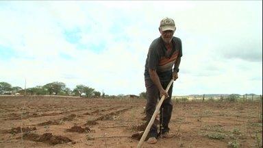 Chuva no sertão de Pernambuco anima agricultores a semear lavouras - Aos poucos, a chuva muda a paisagem de algumas regiões do Nordeste. No Ceará, porém, 176 municípios sofrem por conta da falta de chuva.