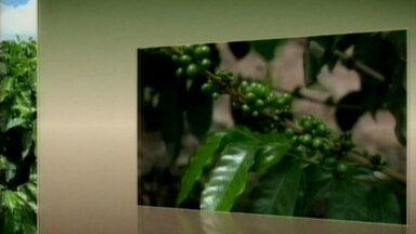 Confira a cotação do café no ES - O arábica tipo 6 fechou em R$ 452 a saca, o tipo 7 em R$ 287 e o conilon tipo 7 em R$ 270 a saca.