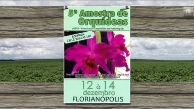 Confira os eventos do setor que acontecem na semana por todo o Brasil - Fique por dentro das festas, cursos e exposições.