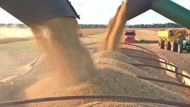 Renda gerada pelo agronegócio deve ter crescimento - Renda gerada pelo agronegócio deve ter crescimento.