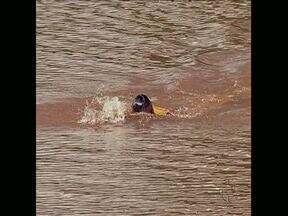 Bombeiros alertam para os perigos de nadar em rios e lagos na região de Londrina - Ontem um adolescente de 17 anos morreu enquanto nadava em uma represa de Cambé.