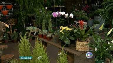 Paisagista dá dicas de cuidados com plantas durante período de viagem - Veja a entrevista com a especialista Raquel Mourão.