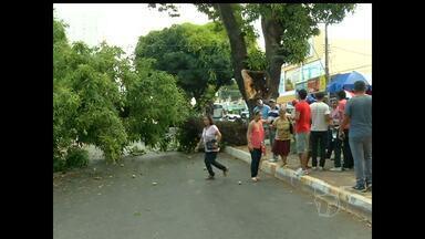 Árvore cai e bloqueia avenida no centro comercial de Santarém - Parte do tronco caiu sobre um poste e provocou curto circuito.