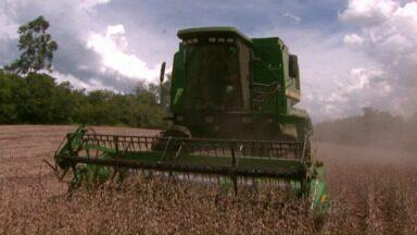 Produtores que plantaram soja mais cedo começam a colheita - Mas a falta de chuva em outubro, época de plantio e em dezembro, quando as plantas estavam em desenvolvimento, trouxe prejuízos.