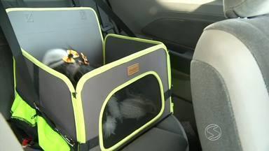 RJTV dá dicas para transportar animas de forma correta nas viagens - Venda de produtos que visam a segurança do pet dobra no período de férias; conheça as punições para quem viaja com animal solto.